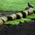 Благоустройство и озеленение в Марий Эл