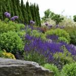Районированные растения