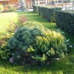 Частное озеленение