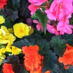 Цветы и цветники Green Star