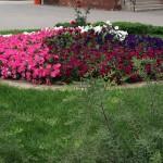 Цветы и цветники в Йошкар-Оле