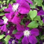 Цветы и цветники в Йошкар-Оле и Республике Марий Эл