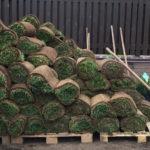Рулонный газон в Йошкар-Оле и Республике Марий Эл