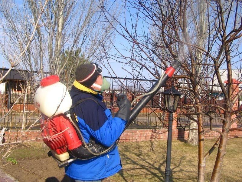 Первые работы в саду