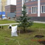 Городское озеленение