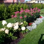 Цветы и цветники в Марий Эл