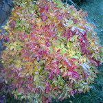 Хвойные и лиственные