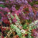 Хвойные и лиственные растения в Йошкар-Оле и Республике Марий Эл