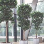Оздоровление воздушной среды - экологический фитодизайн