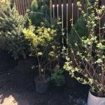 Нагорный - минималистичный сад