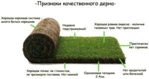 Рулонный газон. Ответы на вопросы