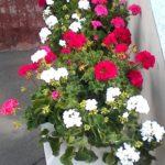 Городское озеленение в Йошкар-Оле и Республике Марий Эл